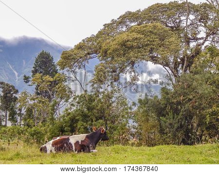 Landscape Scene At Highs Banos Ecuador