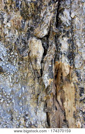 Rain Forest Tree Bark Textures