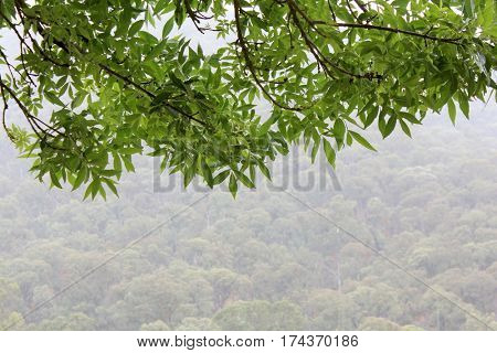 Misty Rain Forest View with branches in foreground