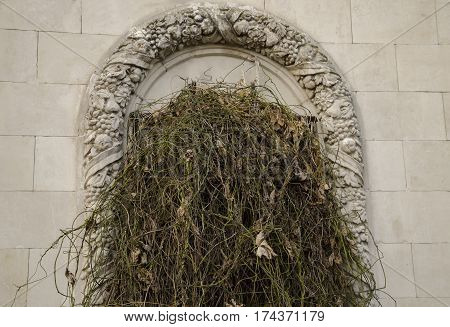 curly branches of grape stem in an arch with a beautiful pattern in the Gothic style