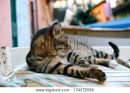 adorable, animal, beautiful, casual, cat, chill, cinque terre, color, comfortable, content, cute, day, domestic, down, eyes, feline, fur, green, grey, hair, isolated, italy, kitten, kitty, lay, laying, looking ahead, mammal, no people, one, outside, paste