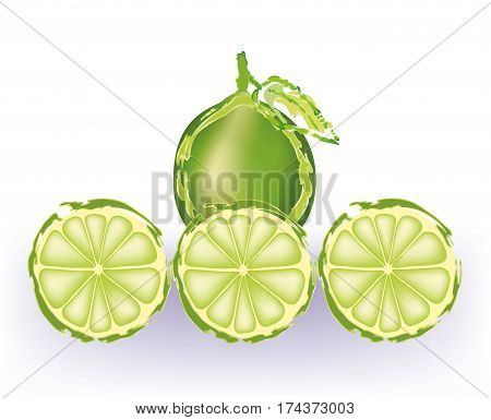 Lime slices in a row on white background