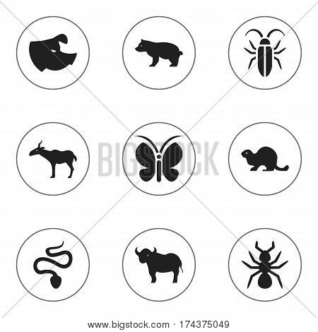 Set Of 9 Editable Nature Icons. Includes Symbols Such As Moth, Bedbug, Wildlife Castor And More. Can Be Used For Web, Mobile, UI And Infographic Design.