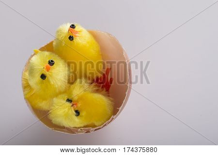 Three chcklings brothers together in their egg