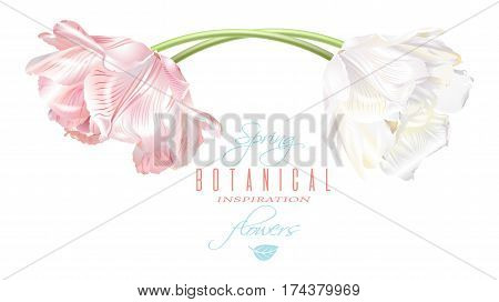Vector horizontal card with white and pink tulip flowers. Spring tender design for natural cosmetics, perfume, florist shop. Can be used as greeting or wedding invitation