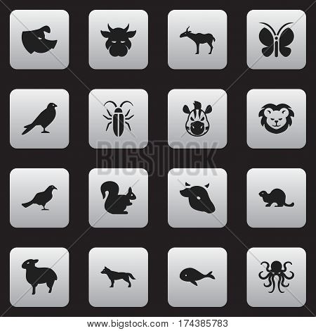 Set Of 16 Editable Zoology Icons. Includes Symbols Such As Kine, Horse, Tentacle And More. Can Be Used For Web, Mobile, UI And Infographic Design.