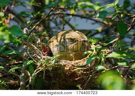 Mama Bird With Its Baby On A Tree In A Nest