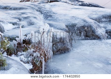 Frozen plants and rock outdoor winter lakeside