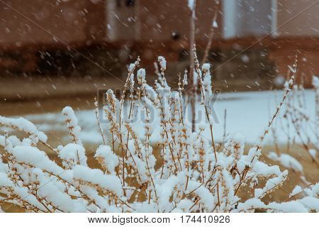 Branches In Snow