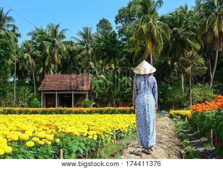 Flower Plantation In Mekong Delta, Vietnam