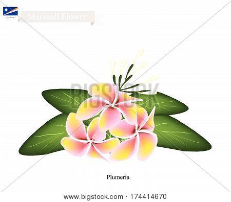 Marshall Flower Illustration of Plumeria Frangipanis Flowers. The National Flower of Marshall Islands.