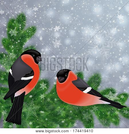 Illustration of bullfinch birds on fir tree branches with snowflake background