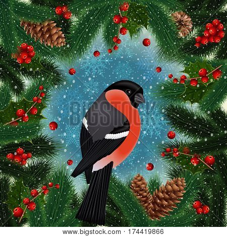 Illustration of bullfinch bird on fir tree holly berry branches with cones and snowflake background