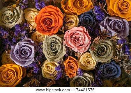 Decorative alive stabilized roses of different colors. background of roses flower.