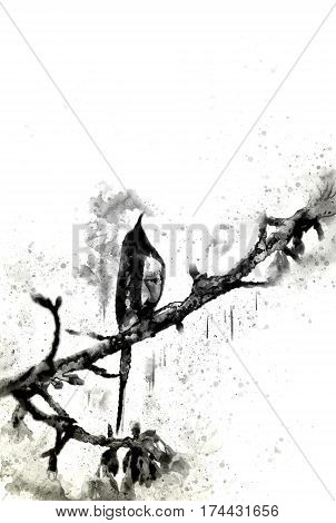 Abstract monotone bird on tree branch with splash of ink on white background digital watercolor painting