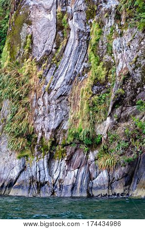 Hanging garden on a steep rock wall in the  Milford Sound on the South Island of New Zealand