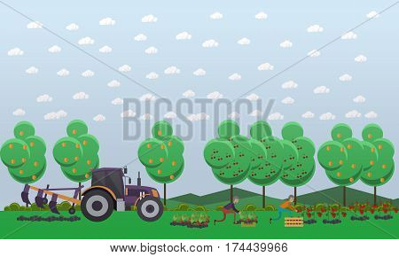 Gardening concept vector illustration in flat style. Gardeners males picking tomatoes, strawberry and putting them into wooden box. Tractor tilling soil.