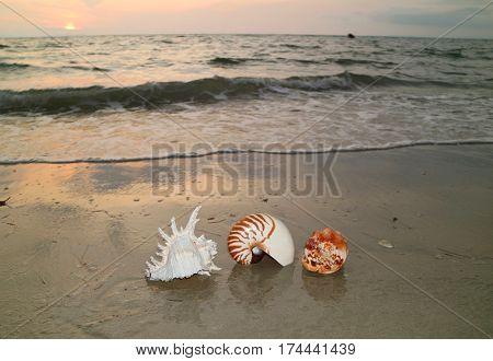 Three types of natural seashells on beautiful sunset beach, Thailand