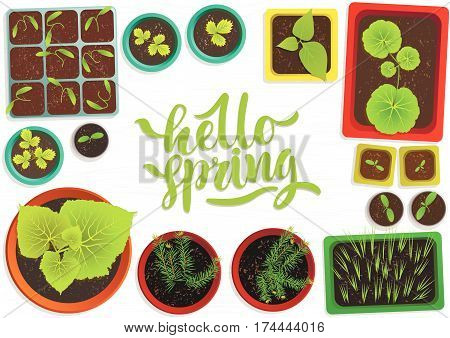 Vector set of flat seedlings of garden plants in colored pots on white wooden surface. Top view. For web template, agriculture store, adv. Hand written green lettering 'Hello spring