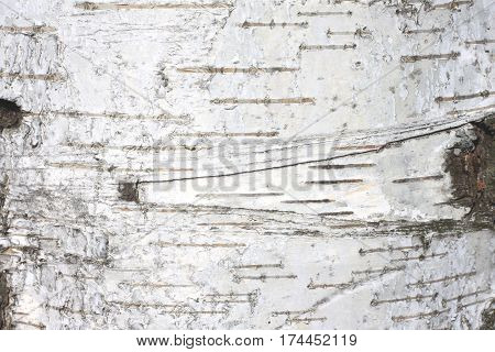 birch bark texture natural background paper close up