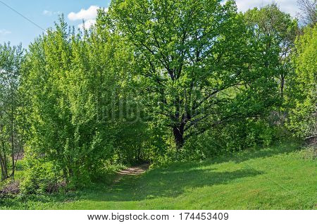 Scenic view of road or track passing through deciduous green forest