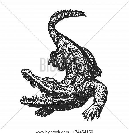 Hand drawn angry crocodile with open mouth, sketch. Croc, giant alligator, gator vector illustration isolated on white background