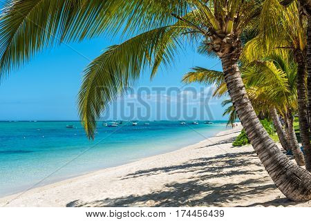 Le Morne Mauritius - December 11 2015: Amazing white beaches of Mauritius island. Tropical vacation in Le Morne Beach Mauritius one of the finest beaches in Mauritius. Palm tree in the foreground.