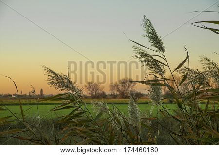 Typical vegetation of the rural areas of northern Italy. Italian vegetation of swamps.