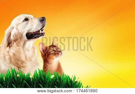 Dog and cat together on grass, spring concept