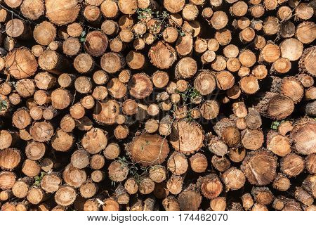 Background of tree trunks pile in forest