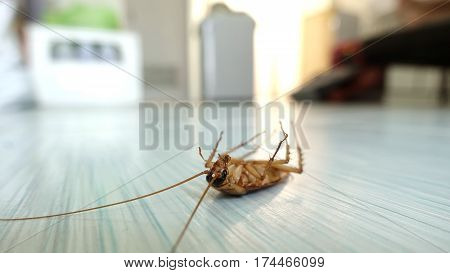 Dead Cockroach On The Floor