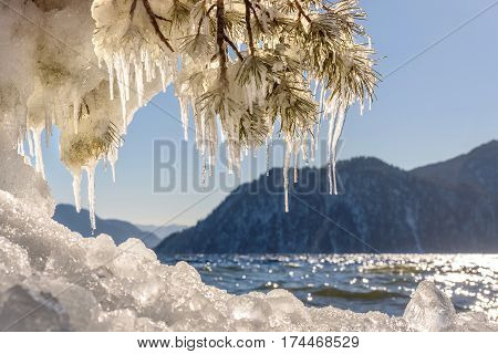Beautiful winter views with the lake mountains ice on the shore the sun glare on the water and pine branches with icicles on a sunny day