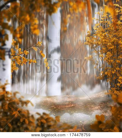 Beautiful autumn mystical background photo montage with a birch grove the foggy meadow of the middle and leaves in the foreground