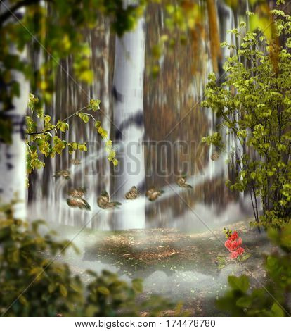 beautiful mystical background photo montage with a birch grove of the middle the meadow with a rose flower between a clouds foggy circle with a butterflies and leaves in the foreground