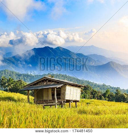 Bamboo Hut And Rice Field With Rice Stubble Left After Harvesting At Ban Pa Pong Piang At Sunset, Ch
