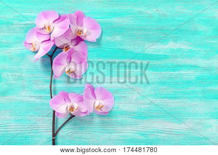 fresh rose orchid flowers the turquoise vintage wooden background horisontal