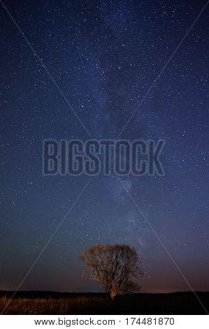 One Tree Stand On Night Stars Background