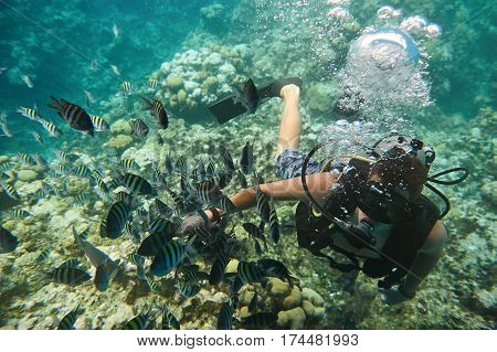 Diver Man Play With Fish