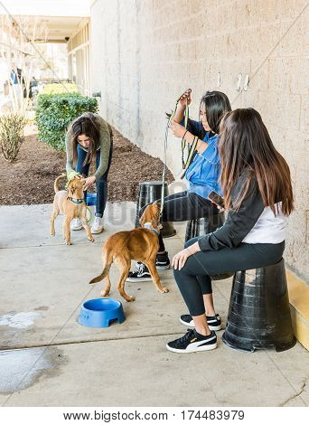 Fairfax USA - February 18 2017: Girls tending dogs that are up for adoption outside of Petsmart