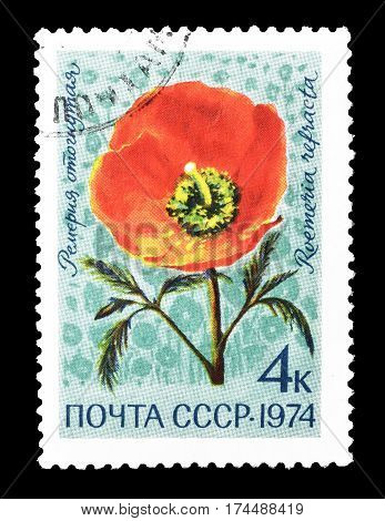 SOVIET UNION - CIRCA 1974 : Cancelled postage stamp printed by Soviet Union, that shows Roemeria refracta flower.