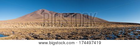 Swamp with dry grass hubbles. Mountains of Altiplano Bolivia South America