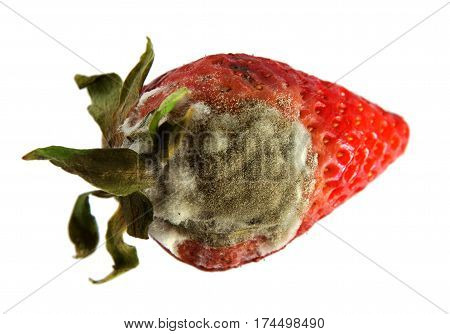 High resolution photo of rotten strawberries isolated on the white background