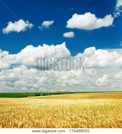 deep blue sky with clouds over golden field