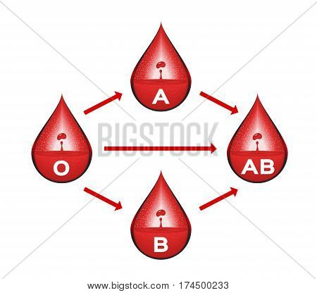 blood group for blood transfusion vector . infographic