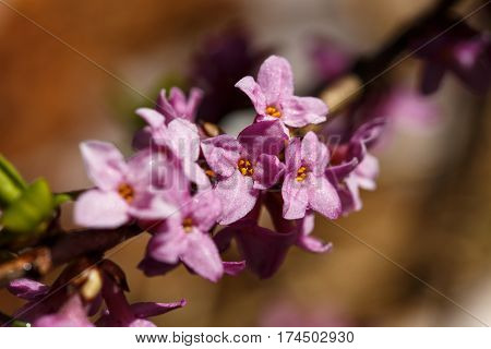 purple flowers growing on a branch, springtime