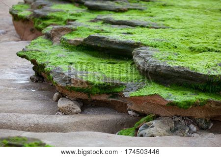 Stones and rocks covered with green algae the ocean shore at low tide. The intricate curves of nature
