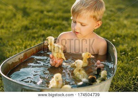 Little cute boy play with ducklings in the tub on a bright background. Little child with many yellow small ducklings. Boy with ducklings play, swim in the water in summertime.