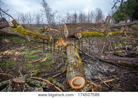 Heap Of Sawn Wood Logs With Rough Bark Closeup View