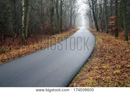 Creepy foggy empty forest asphalt road going nowhere