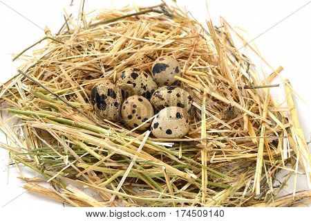 Grass and plants in quail eggs, bird's nest and eggs, pictures of eggs in quail's nest, chicken and quail's eggs, eggs in the most beautiful bird's nest